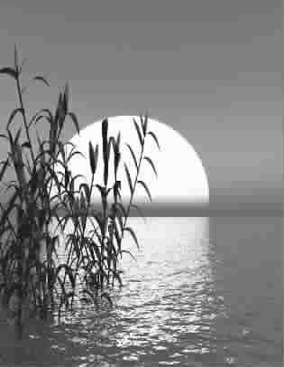 月光下的凤尾竹歌简谱葫芦丝展示