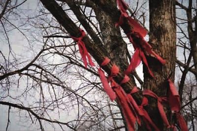"""珍宝岛上见证了自卫反击战的硝烟和英雄战士们的壮举,被誉为""""英雄树""""."""