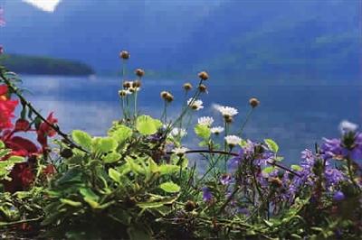 最美的花朵风景图片