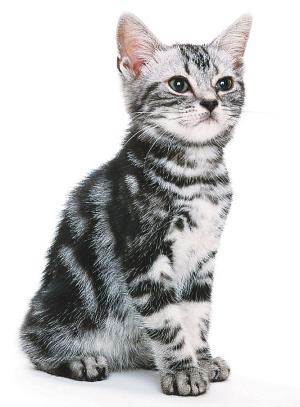 壁纸 动物 猫 猫咪 小猫 桌面 300_407 竖版 竖屏 手机