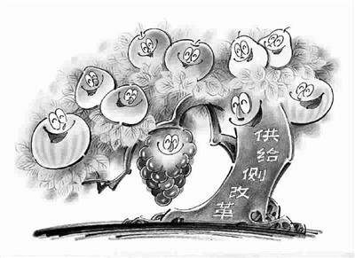 猕猴桃果园漫画手绘