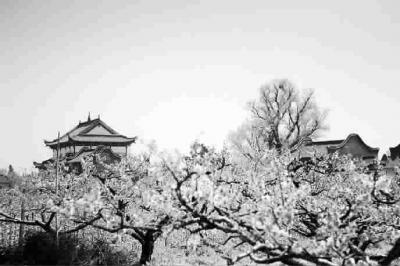 小清新风景梅花的图片