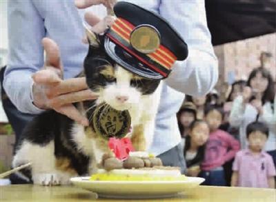 """一年带来11亿日元收益 日本超人气""""猫站长""""去世"""