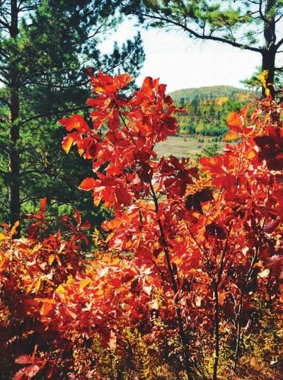 九月红叶风景图