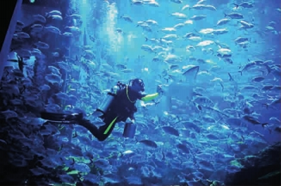 拜水族馆与水下动物世界