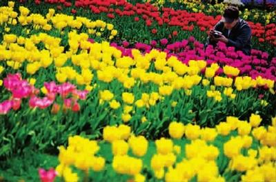 春季主题花卉展示区,庭院植物展示区,盆景艺术展示区,diy花园展示区