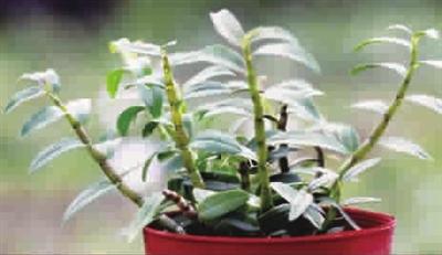 手账素材植物类