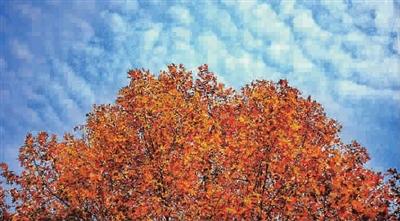 落叶满申城 风中觅诗意图片