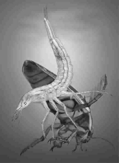 的树栖爬行类动物