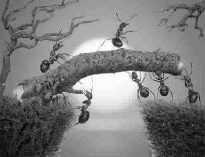 蚂蚁是最容易观察到的一种动物