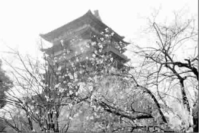 b10: 旅游城市/精华路线 本版列表新闻 ◆秀秀   ◆秀秀   梨花,桃花