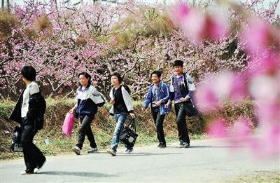 恰是沪上中小学生乃至幼儿园小朋友春游的高峰