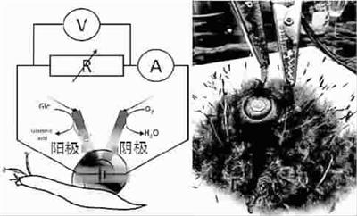 胶体电池内部结构
