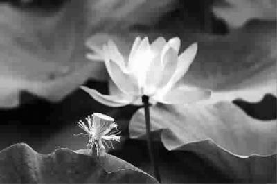 金莲花的折法步骤图解