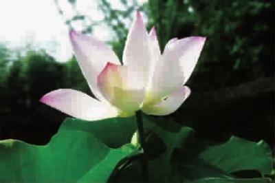 莲花折法步骤图解教程