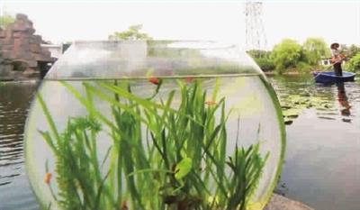 """沉水植物,水生动物等元素构建的""""水下森林"""""""