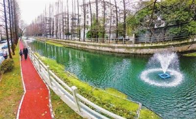 朝阳河        普陀区朝阳河边漫步,健身,享受好树好水好风景本报