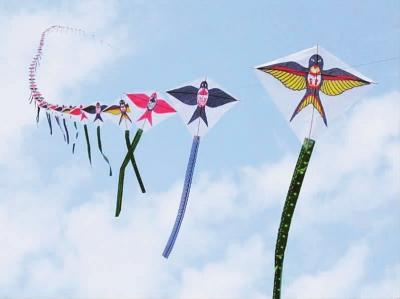 放风筝图片(共10篇)